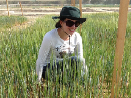 KAUST researcher Stephanie Saade at the field site where the team trialed multiple lines of barley generated from the same mother line but with different fathers.