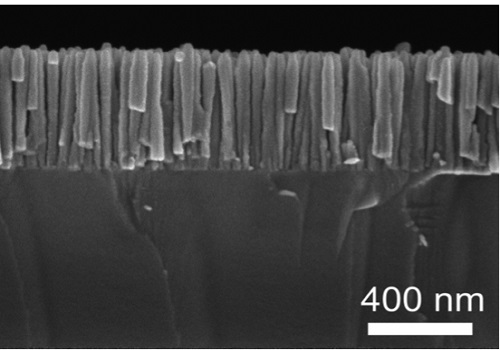 Image 2. Nanowires of indium gallium nitride (InGaN) on a silicon substrate can be used in applications such as laser diodes and photovoltaic devices.