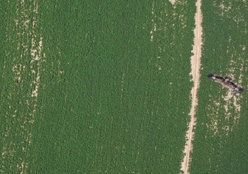 A steppe eagle in flight over crops was photographed by an unmanned aerial vehicle from above the fields during trials by McCabe's team in Saudi Arabia.