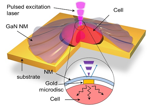 The gallium nitride nanomembrane (GaN NM) is shown attached to a cell. When a pulsed laser is directed onto the nanomembrane, heat is transferred to the cell via a gold microdisc. By monitoring the emitted photoluminescent light (blue arrows), the researchers can calculate the thermal transport properties of the cell.