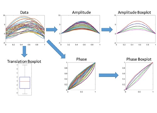 A new box-plot method makes sense of functional data (top left) by deriving summarized statistical functions for amplitude (top right) and phase (bottom right) along with a conventional box-plot for translation (bottom left).