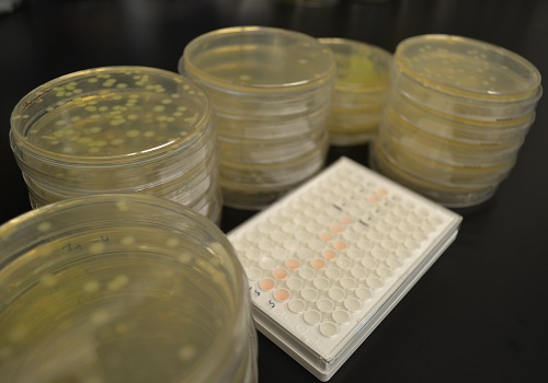 Researchers at KAUST have uncovered a gene circulating in the Jeddah wastewater networks that confers resistance to last-resort antibiotics. The team also showed that a gene is carried by a strongly resistant strain of E.coli, PI7, which can survive for long distances through the municipal wastewater system.