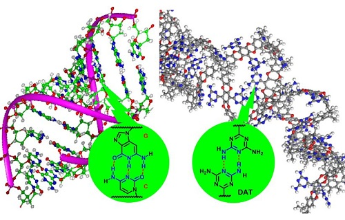 Hydrogen bonding in DNA (left) and between DNA-like functional groups in the adsorbent (right)