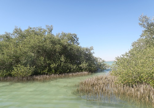 Mangrove forests in the Red Sea.