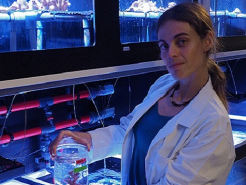 Claudia Pogoreutz in the KAUST Coastal and Marine Resources Core Lab; the team's experiments show that corals suffer bleaching after spending time in a sugar-enriched environment even without the influence of heat or light stress.