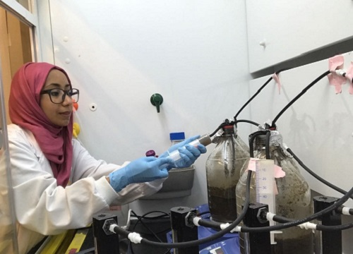 Nada Al-Jassim and coworkers conducted experiments to verify whether solar irradiation can be used to kill E.coli strains in wastewater.