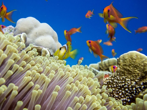 Cnidarians (corals and anemones) form the habitat for a vast diversity of reef fishes and other species.
