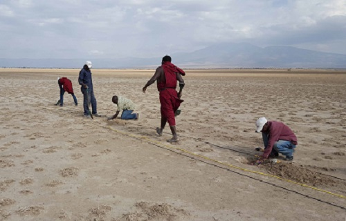 Local Maasai staff lay out the geophones, a crucial piece of equipment in seismic imaging of the Olduvai Basin.