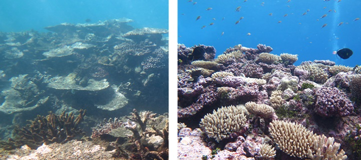 A degraded reef in Samoa (left) shows that even reefs far from large urban centers are being affected by climate change.  However, healthy reefs (right) were found within Upolu's marine protected areas and near the Cook Islands southwest of Samoa, indicating that local action to protect resources can go a long way.