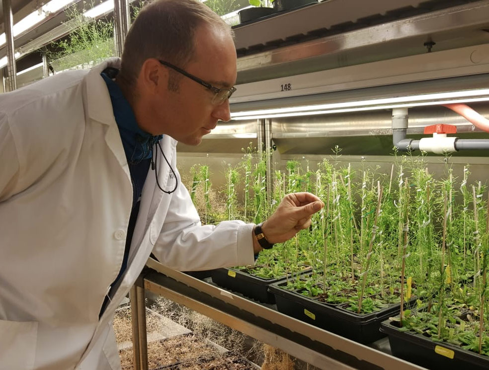 Ronny Völz tends to his Arabidopsis plants.