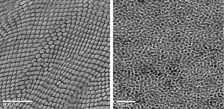Electron micrograph images of membranes with ordered (left) and disordered (right) channel structures.