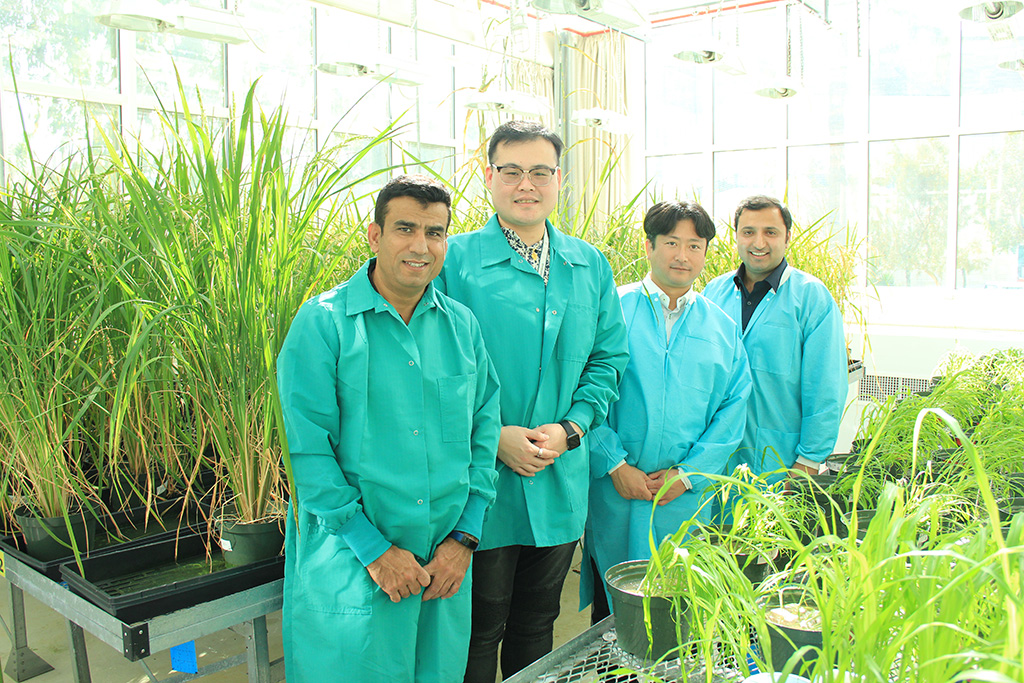 The KAUST co-first authors in the KAUST Greenhouse (from left to right): Muhammad Jamil, Jian You Wang, Yoshimoto Saito and Imran Haider.