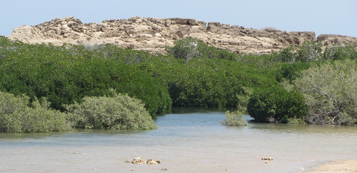 Farasan Island mangrove forest in southwestern Saudi Arabia, one of the three study sites.