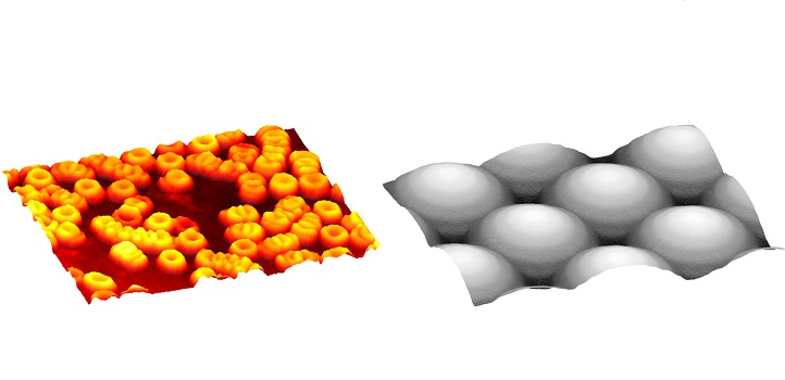 Quantitative phase imaging enables researchers to detect geometry of small transparent samples with fine structures; for example, three-dimensional red blood cells (left) and a microlens array (right).