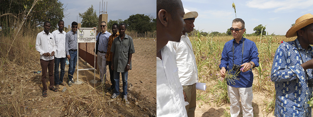 Salim Al-Babili and his team at their field site in Burkina Faso.