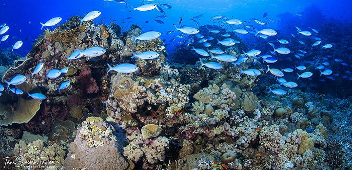 "Well-studied coral reefs are considered the ""canary in the coal mine"" as they show early impacts of warning and ocean acidification."