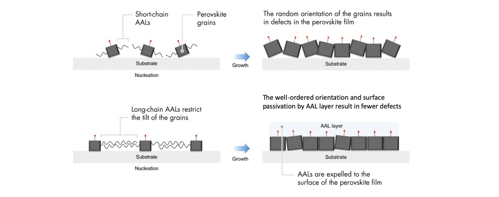The mechanisms underpinning efficiency enhancements. Compared to short-chain alkylamine ligands (AALs) (top), long-chain AALs (bottom left) help neighboring perovskite grains to align, resulting in fewer defects in the final film (bottom right).