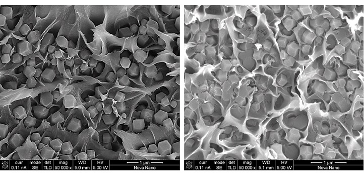 Cross-sectional SEM images show differences in physical characteristics of the membranes..