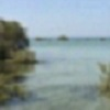 Coastal creep by Red Sea mangroves