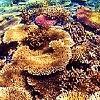 A warm relationship between corals and bacteria