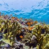 Can coral reefs change with the times?