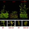 Plants coping with salt stress