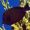 Diet drives gut bacteria in reef fish